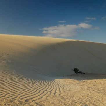 The Sand Dunes of Corralejo
