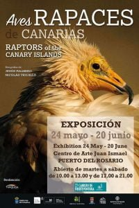 Raptors of the Canary Islands Photo Exhibition @ Centro de Arte Juan Ismael, Puerto del Rosario | Puerto del Rosario | Canarias | Spain