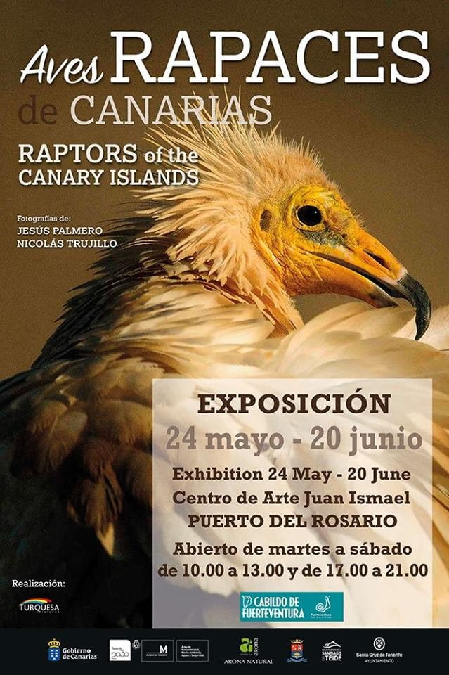Raptors of the Canary Islands