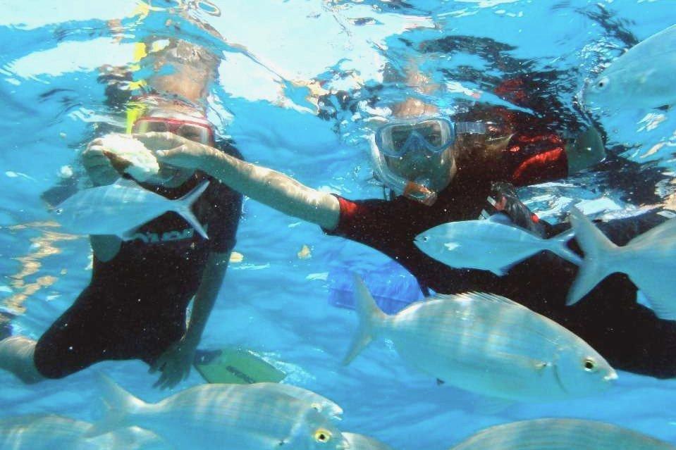 Snorkelling at Isla de Lobos